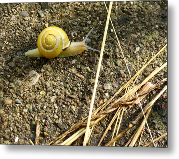 Lemon Snail Metal Print