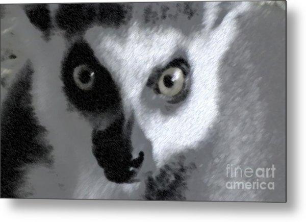 Lemur Metal Print by John From CNY
