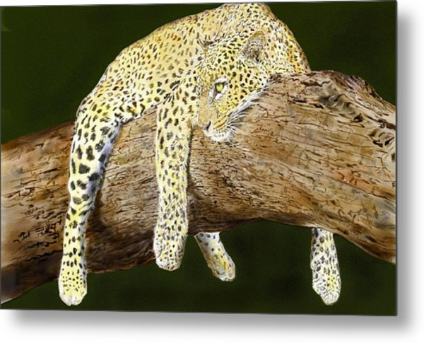 Leopard At Rest Metal Print by Yvonne Scott