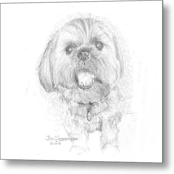 Lhasa Apso Metal Print by Jim Hubbard