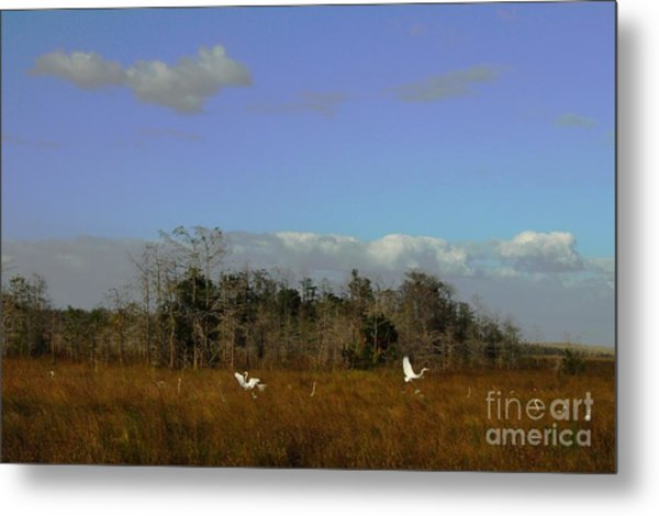 Lifes Field Of Dreams Metal Print