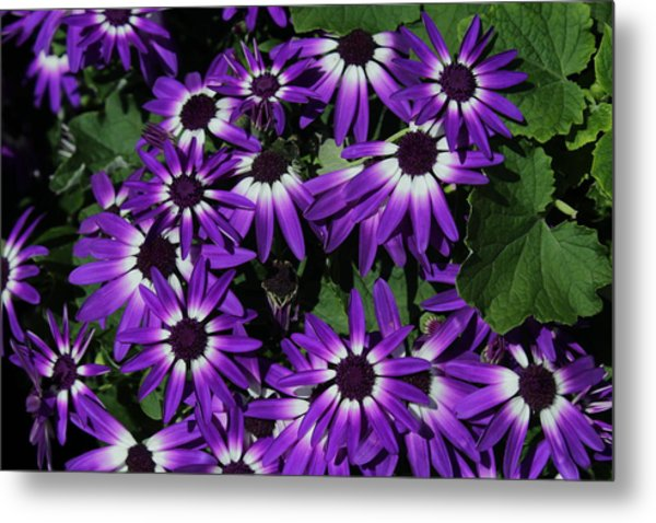 Light In The Middle  Metal Print
