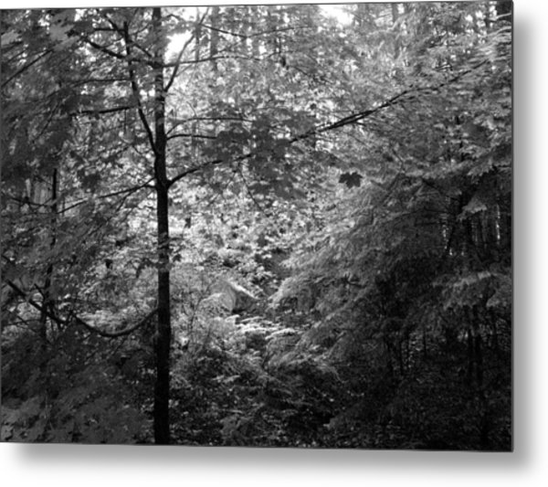 Light In The Woods Metal Print