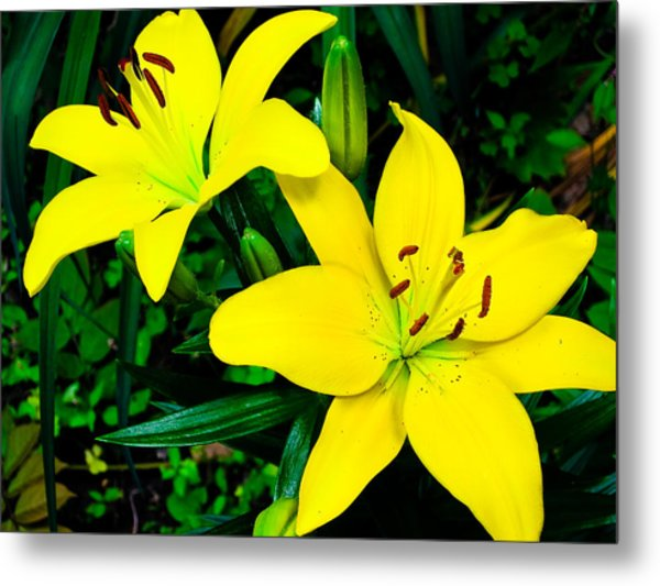 Lilies Metal Print by Michael Ray