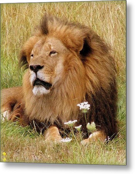 Lion Bouquet Metal Print by Judy Garrett