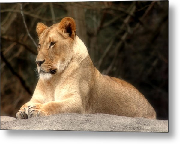 Lioness - Queen Of The Jungle Metal Print
