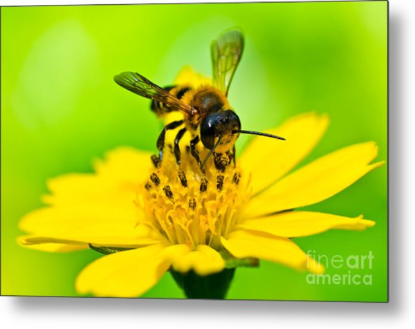 Little Bee In Yellow Flower Metal Print by Peerasith Chaisanit