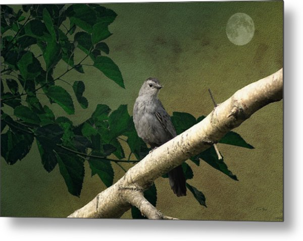 Little Bird Metal Print by Tom York Images