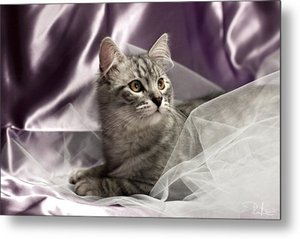 Little Cat On Lilac Metal Print