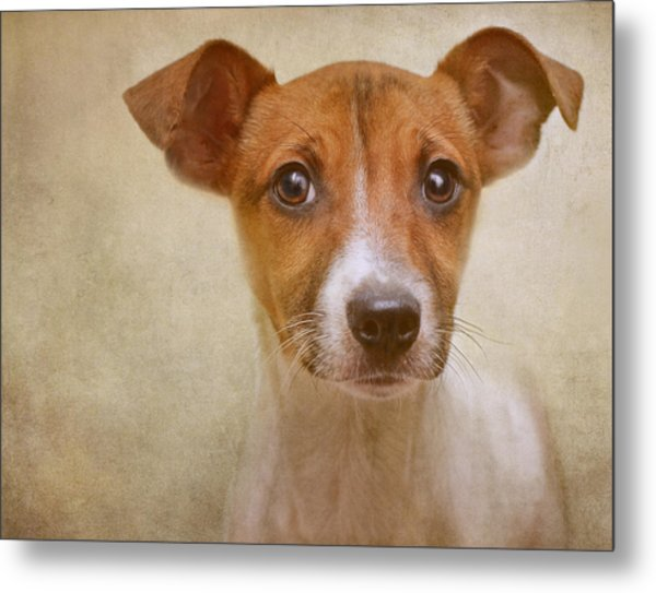 Little Jack In Pastels Metal Print