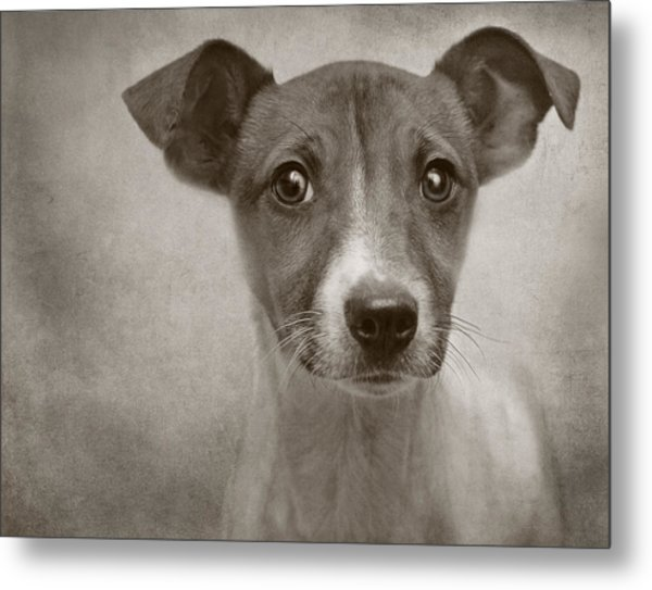 Little Jack Monochrome Metal Print