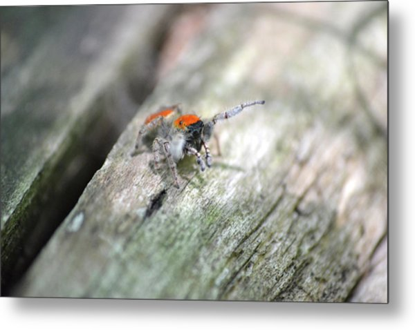 Little Jumper Metal Print