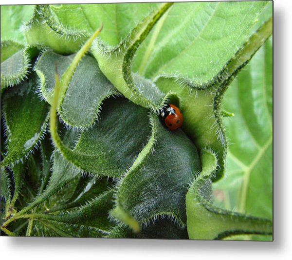 Little Lady Seeks Shelter Within A Green Sunflower Metal Print