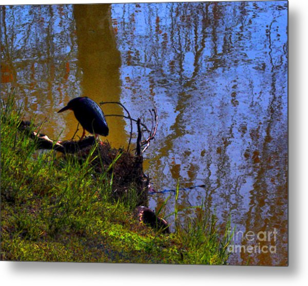 Little Pond At The Zoo Metal Print
