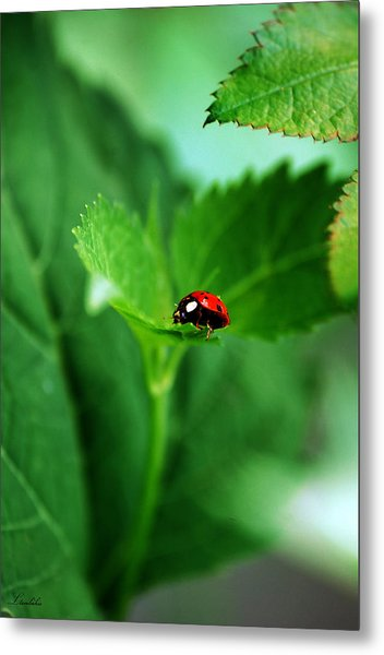 Little Red Lady Metal Print