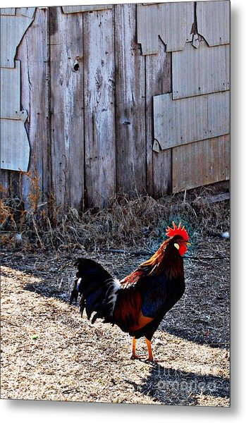 Little Red Rooster Metal Print