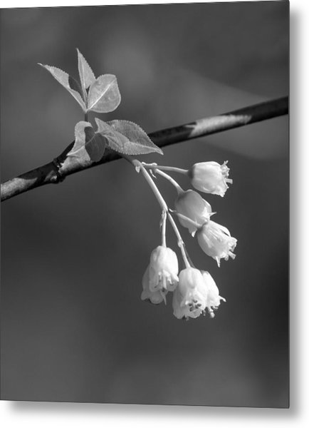 Little White Bells Metal Print by David Lester