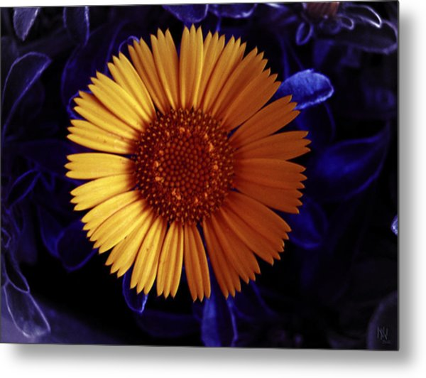 Little Yellow Flower Metal Print by Nafets Nuarb