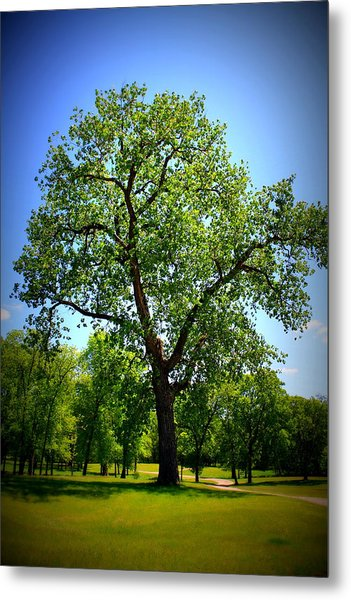 Old Green Tree Metal Print