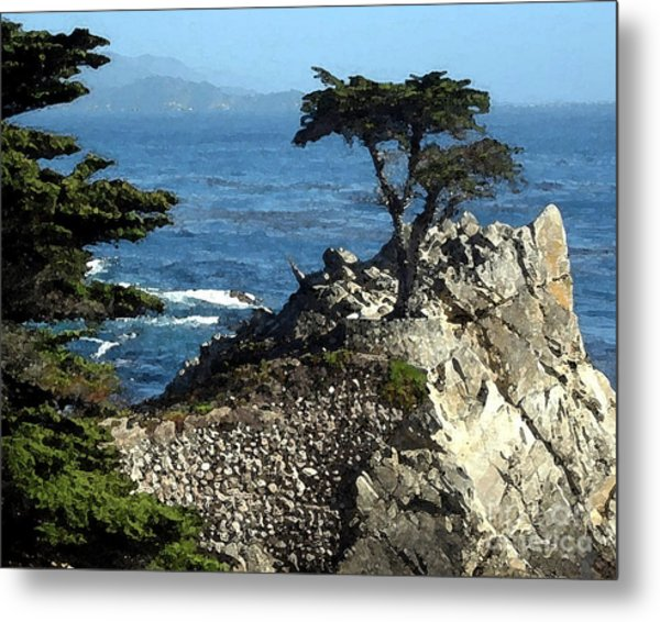 Lone Cypress Tree Metal Print