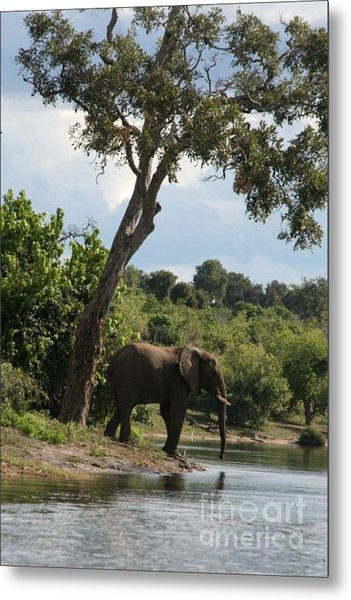 Lone Elephant Water Hole Metal Print by Carol Wright