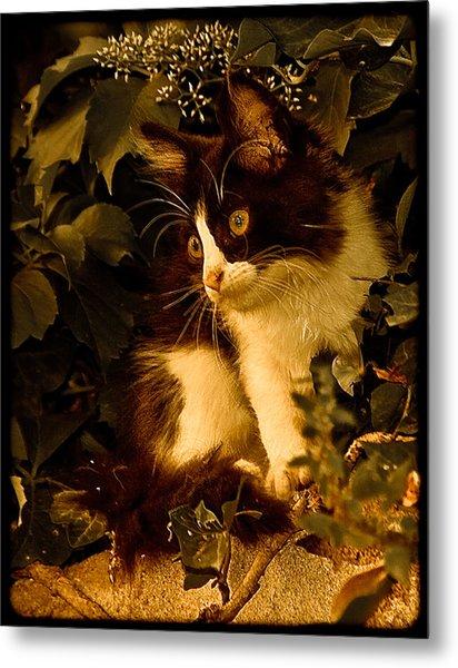Athens, Greece - Lone Kitten Metal Print