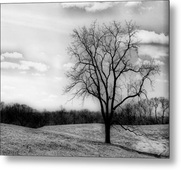 Loneliness Metal Print by Trudy Wilkerson