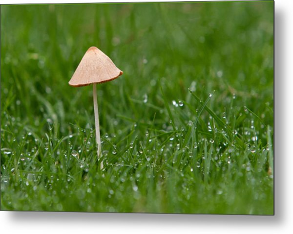 Lonely Mushroom Metal Print by Miguel Capelo