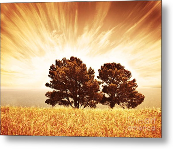 Lonely Old Trees Metal Print by Anna Om