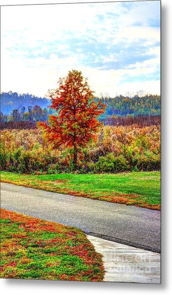 Lonely Tree 2 In Otto Armleder Park Metal Print