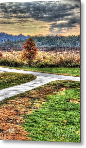 Lonely Tree In Otto Armleder Park Metal Print