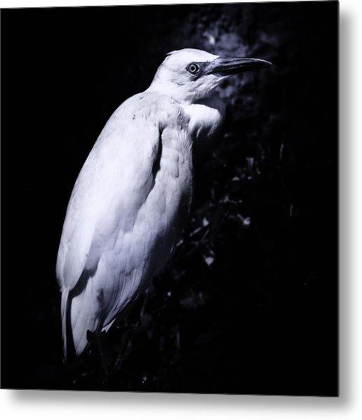 Lonesome Egret Metal Print
