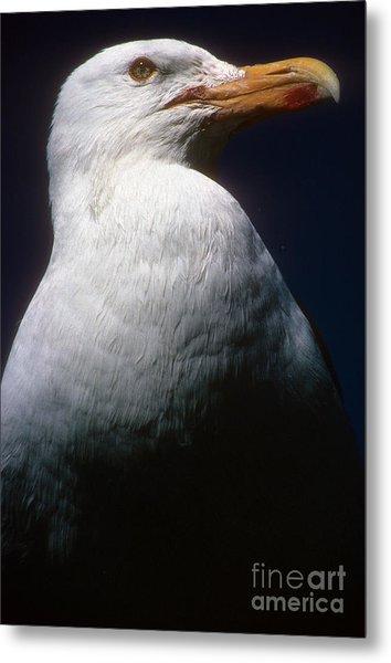 Long Island Seagull Metal Print