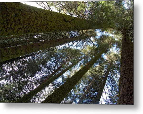 Metal Print featuring the digital art Look Up And Dream by Visual Artist Frank Bonilla