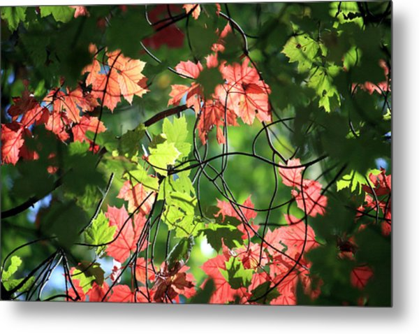 Look Up In Autumn Metal Print by Julia Mayo