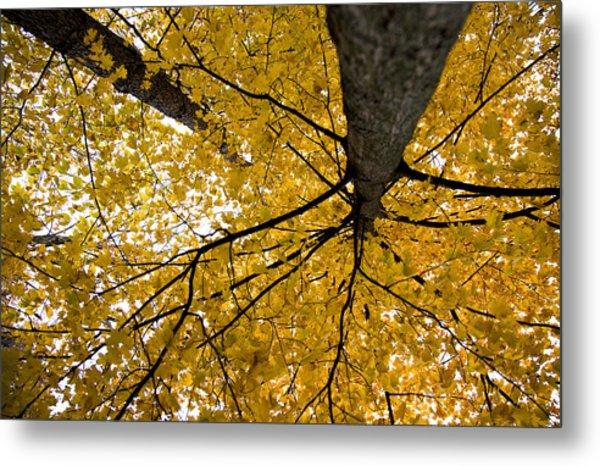Look Up It Is Fall Metal Print