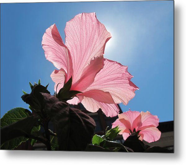 Looking Towards The Heavens Pink Hibiscus Flower Under A Blue Sky