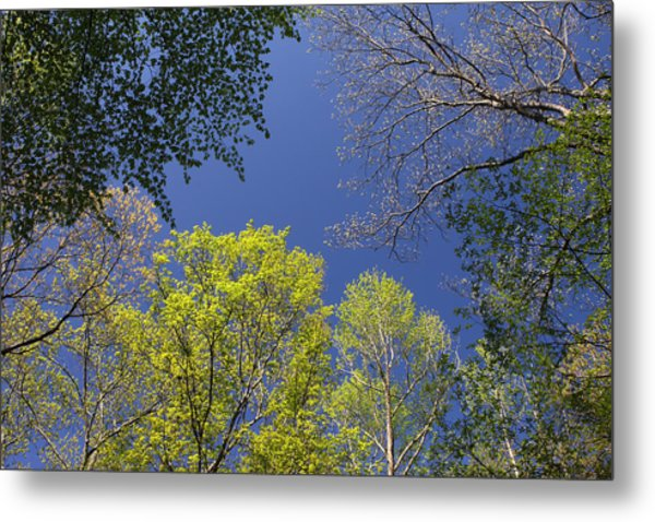Metal Print featuring the photograph Looking Up In Spring by Daniel Reed