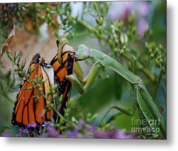 Losing The Wings Metal Print by Joy Bradley
