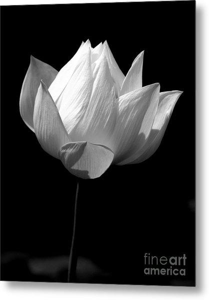 Lotus Bw Metal Print