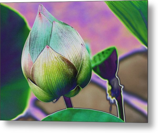 Lotus Dreaming 7 Metal Print