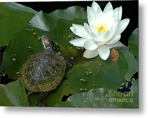 Lounging On A Lily Pad Metal Print