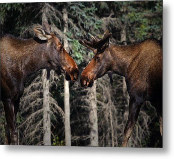 Love At First Sight Metal Print