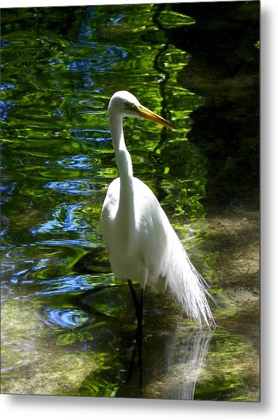 Lovely Bird Metal Print by Judy Wanamaker