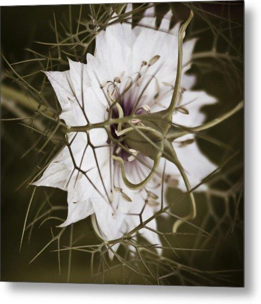 Love's Thorns Metal Print