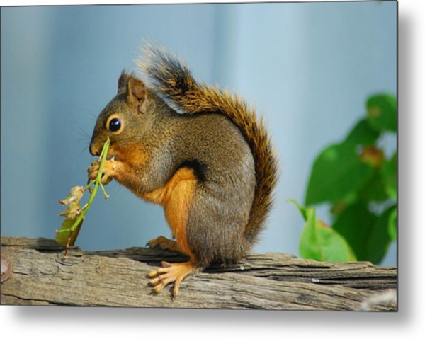 Lunch On A Log Metal Print