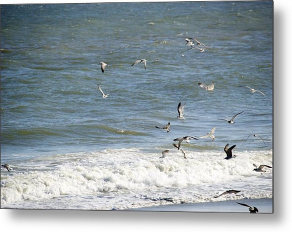 Metal Print featuring the photograph Lunch Time by Ralph Jones