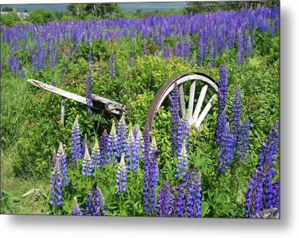 Lupin Wheels Metal Print