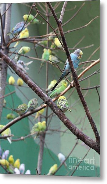 Macaw Metal Print by Yuro Choi