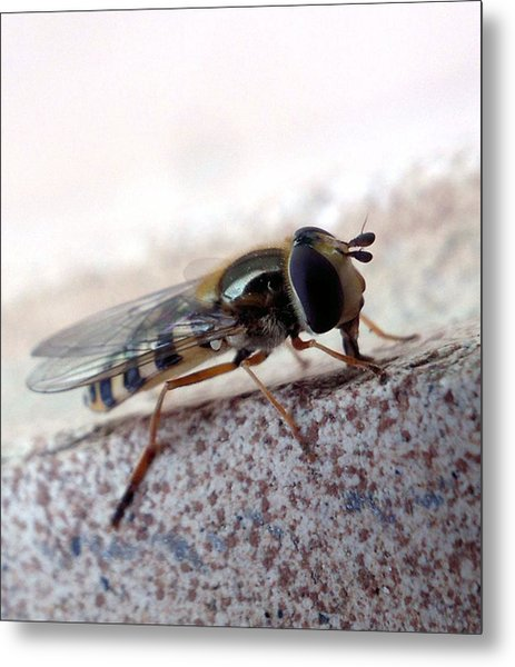 Macro Insect Metal Print by Ernestas Papinigis